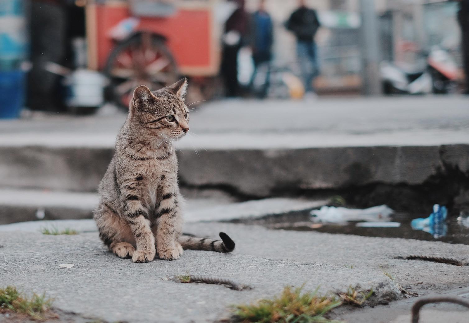 Fond TatryVet pomáha zvieratkám